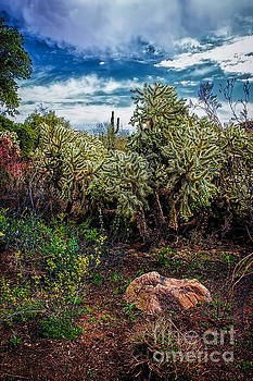 Jon Burch Photography - Cactus and Bird