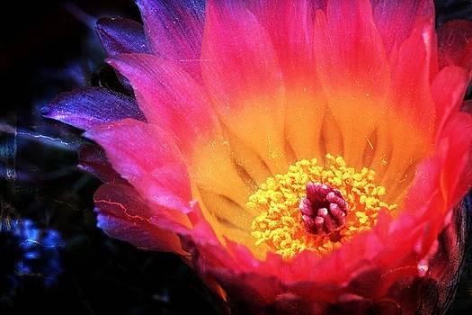 Cactus Beauty by Koji Kanemoto