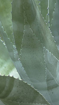 Cactus by Billy Stovall