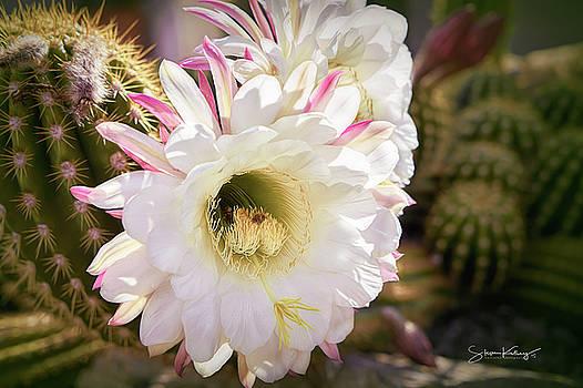 Cactus Bloom 2 by Steve Kelley
