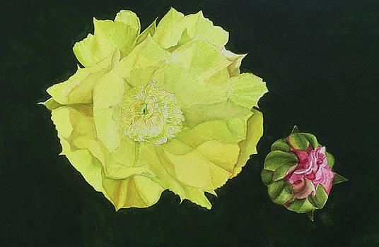 Cactus Bloom by C Wilton Simmons Jr