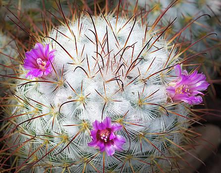Cactus Bloom by Georgette Grossman