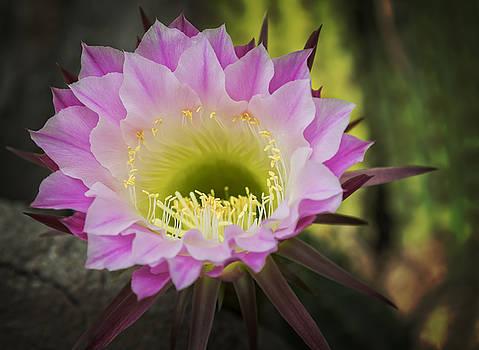 Ricky Barnard - Cactus Bloom