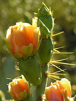 Cactus buds by Diane Greco-Lesser