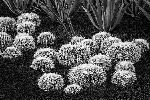 Rick Strobaugh - Cactus BW