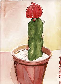 Cactus by Daniel Ribeiro