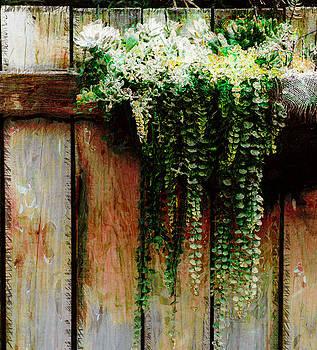 DONNA BENTLEY - Cactus