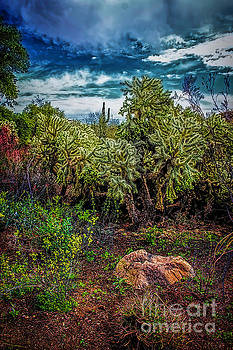 Jon Burch Photography - Cactus Dreams