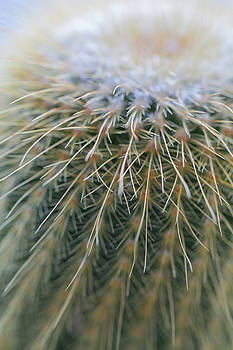 Elvira Pinkhas - Cactus