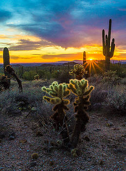 Cactus Flare by Casey Stanford