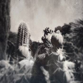 Cactus Flower 3 by Anne Thurston
