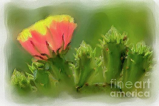 Dan Carmichael - Cactus Flower on a Cactus Plant AP