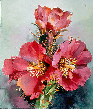 Cactus Flower by Sandy Reese
