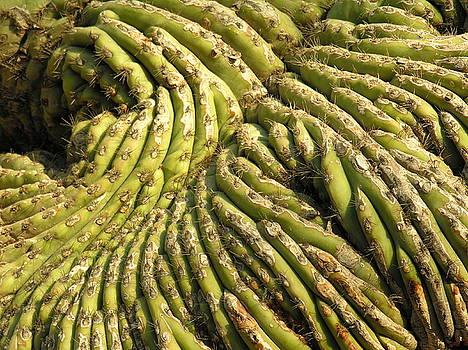 Cactus forming by Diane Greco-Lesser