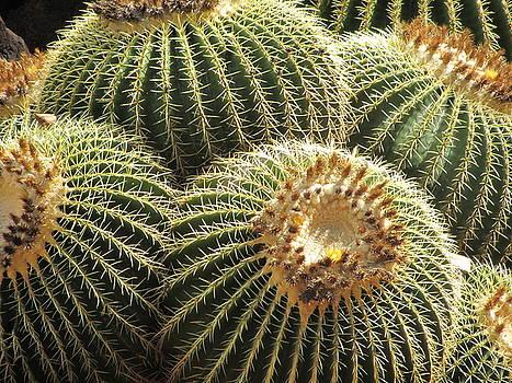 Cactus  by Galina Kolpatcheva