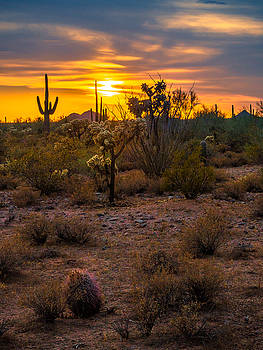 Cactus Path Sunset by Casey Stanford