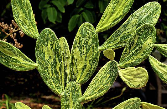 Cactus Patterns by Richard Goldman