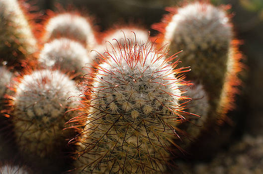 Cactus Plants by Miguel Winterpacht