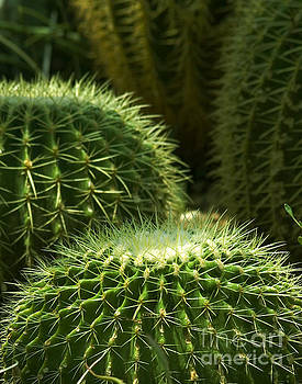 Cactus by Robert  Suggs