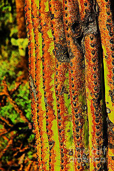 Cactus Skin, Green, browns, Black by David Frederick