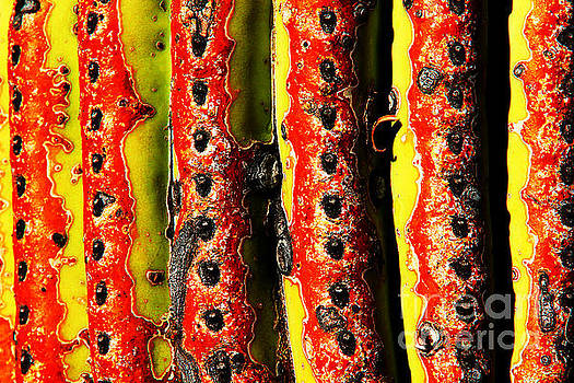 Cactus Skin, Green, Red, Black by David Frederick