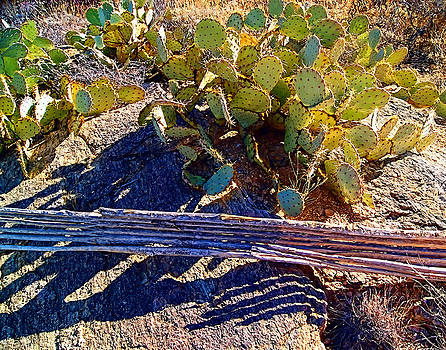 Cactus Spine Shadows by Bruce Wood