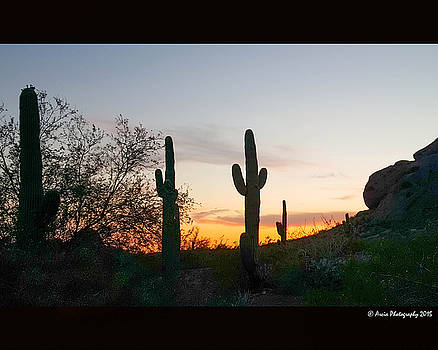 Cactus Sunset by Ken Arcia