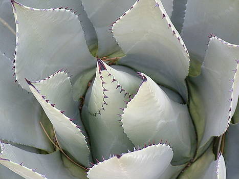 Cactus Up Close by Vickie Roche