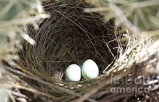 Cactus Wren Eggs by Kerri Mortenson
