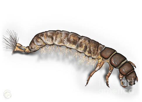 Caddisfly Larva Nymph Psychomiidae Hydropsyche pellucidula -  by Urft Valley Art