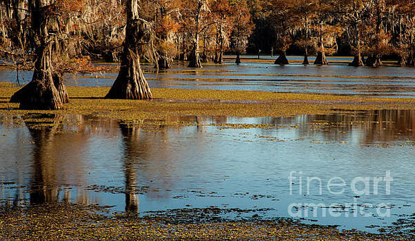 Caddo Lake 2016 by Iris Greenwell