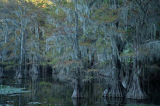 Caddo Lake #3 by David Chasey