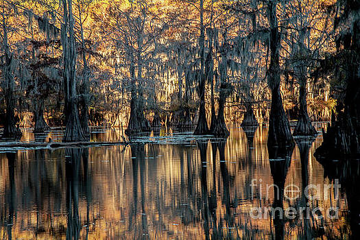 Caddo Lake Sunrise by Iris Greenwell