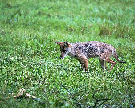 Jemmy Archer - Cades Cove Coyote Hunting