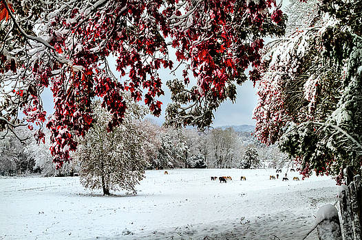 Cade's Cove Horses in Snow by Joe Ladendorf