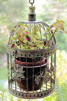 Allen Nice-Webb - Caged Coleus