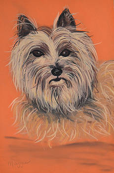 Cairn Terrier by Christine Crosby