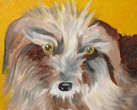 Cairn Terrier by Susan Kubes