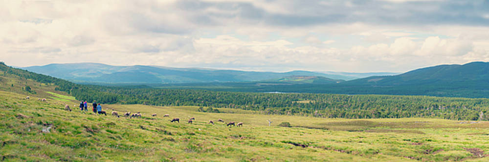 Cairngorms Landscape by Ray Devlin