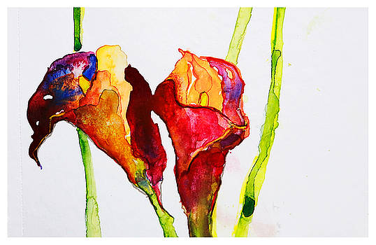 Calas flower by Natalia Stahl