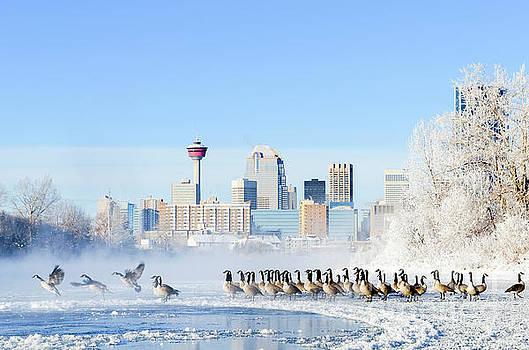 Calgary Winter by Michael Wheatley