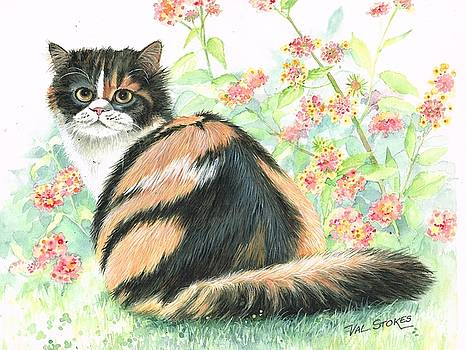 Calico cat.. by Val Stokes