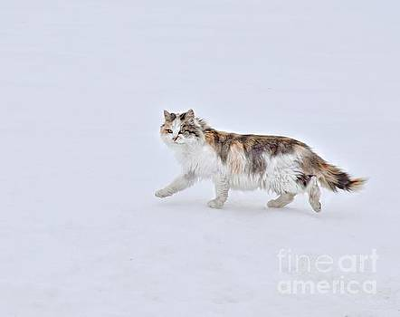Calico Huntress by Kathy M Krause
