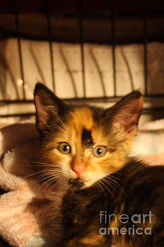 Calico Kitten by Wendy Coulson
