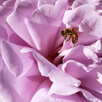 California Bee by Georgette Grossman