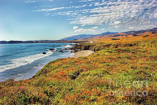 Dan Carmichael - California Coast Wildflowers on Cliffs