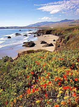 Dan Carmichael - California Coast Wildflowers Vertical Format