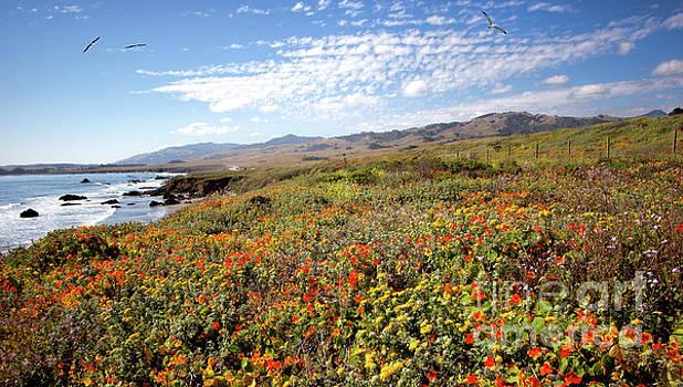 Dan Carmichael - California Coast Wildflowers with Birds