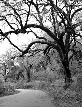 Balanced Art - California country road