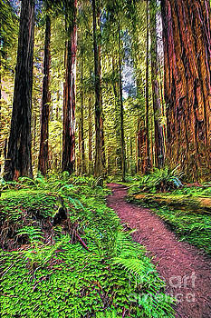 California Ferns Redwoods and Hiking Path AP by Dan Carmichael
